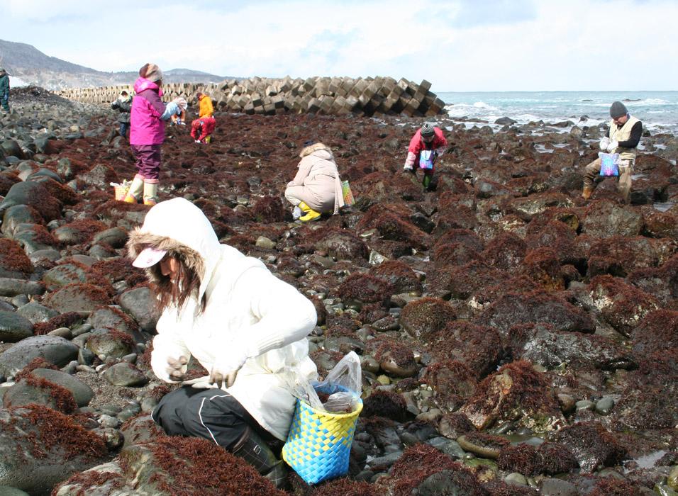 布海苔養殖