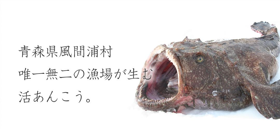 青森県風間浦産 活あんこう